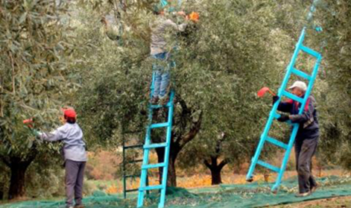 Гърция вече търси сезонни работници