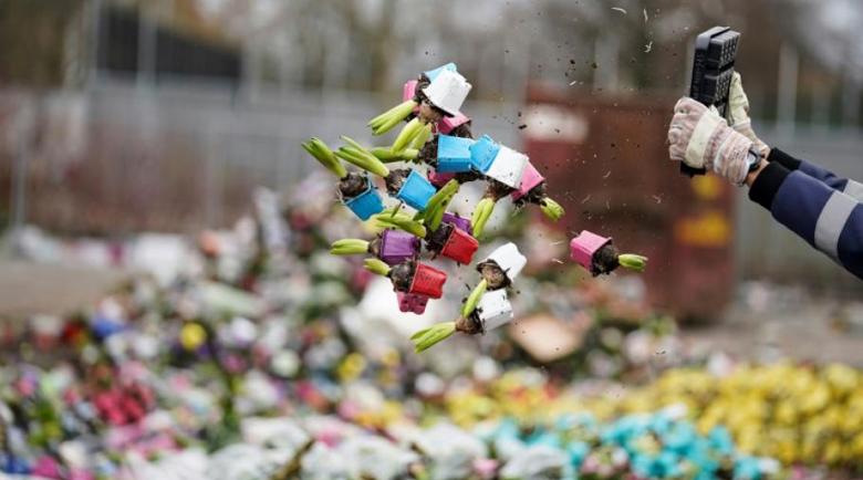 В Нидерландия затриха 140 милиона лалета