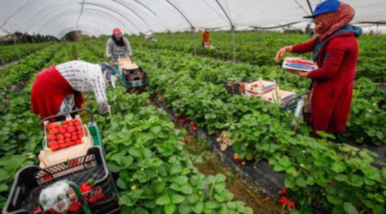 Румънските сезонни работници пристигат на Острова