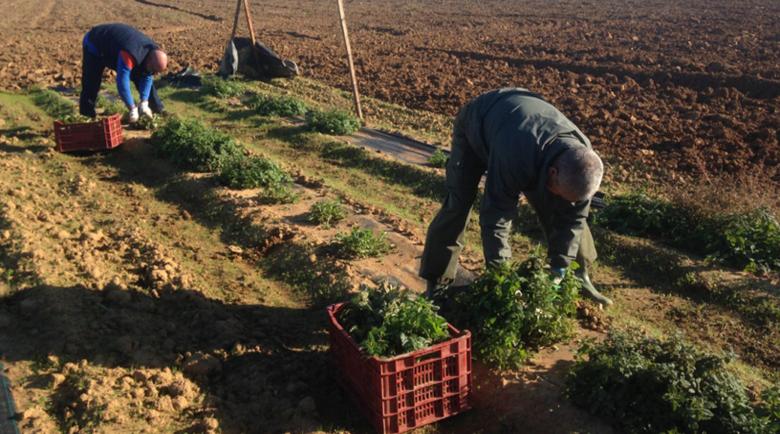 Испания разчита на безработните испанци и на имигрантите за земеделската работа