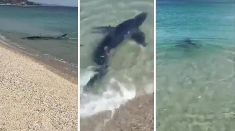 Акули се появиха край плажовете на Калабрия