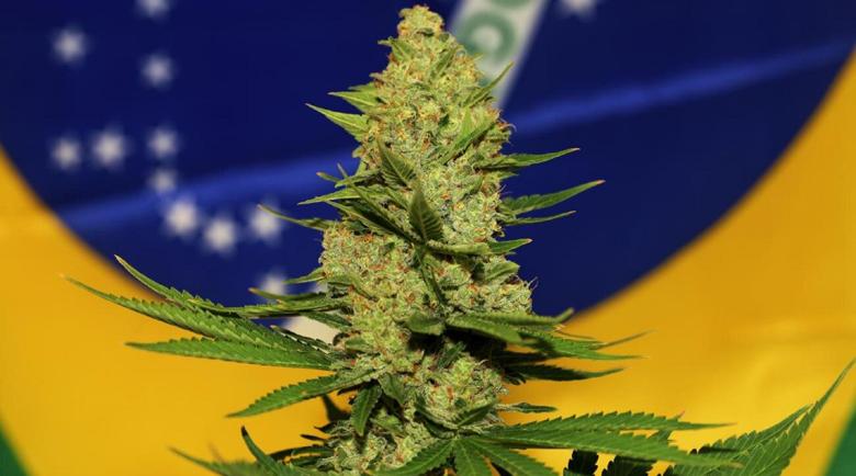 Откриха 28 тона марихуана в камион с царевица в Бразилия