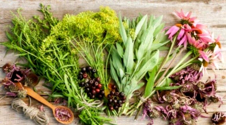 Домашните рецепти за здраве на баба Рада