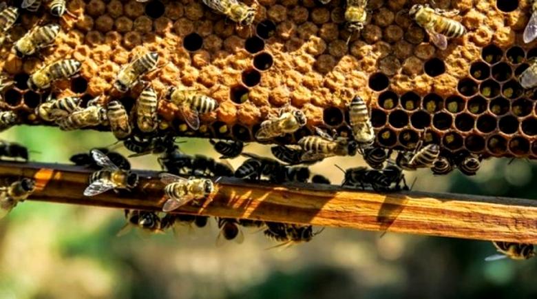 Пчелна пита за здрави бъбреци