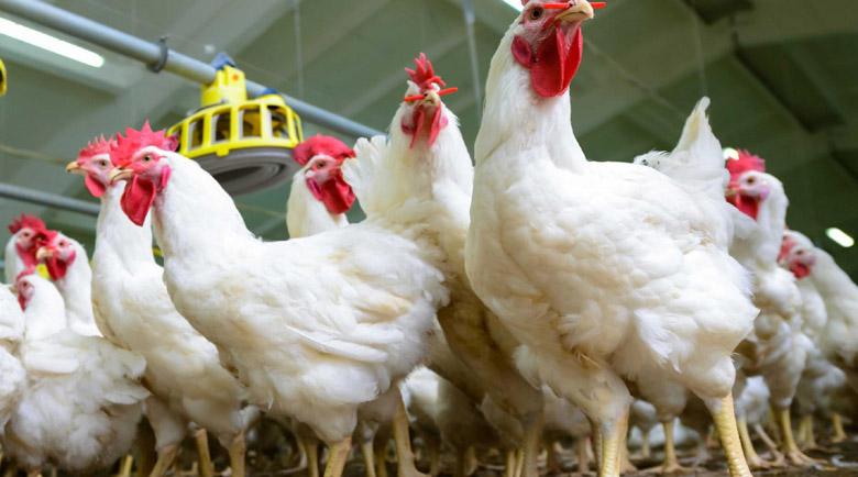 Откриха и птичи грип в Хърватия