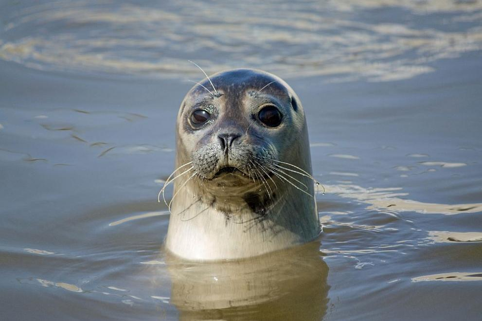 Гняв в Гърция: Убиха тюлен монах, превърнал се в местна знаменитост